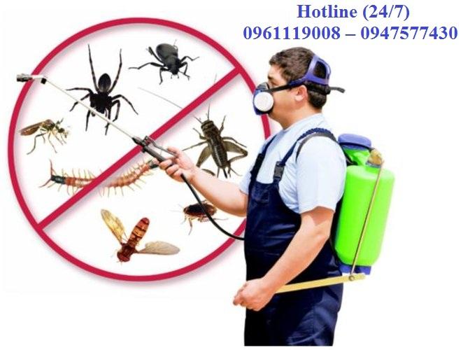 Dịch vụ diệt côn trùng hàng đầu tại Quảng Trị
