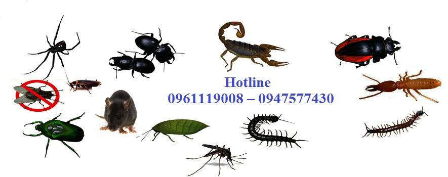 Công ty diệt côn trùng hàng đầu huyện Sóc Sơn Hà Nội