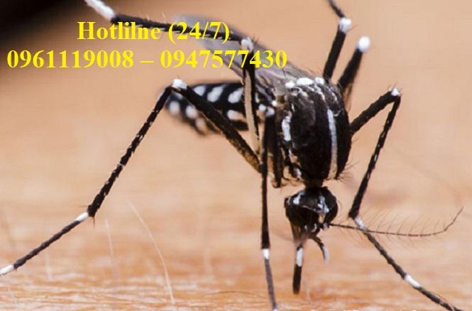 Dịch vụ diệt muỗi uy tín hàng đầu chuyên nhận diệt côn trùng, muỗi, bán thuốc diệt muỗi,.....