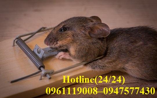Chúng tôi sử dụng bẫy chuột tự nhiên nhằm đảm bảo an toàn cho con người và môi trường