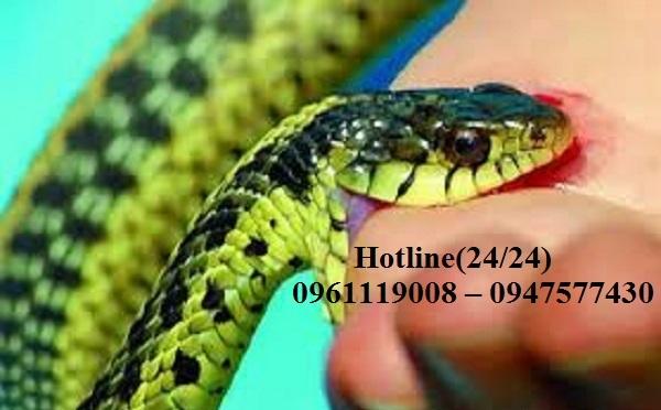 Dịch vụ phun ngừa rắn, bắt rắn tại Hà Nội là một trong những đơn vị uy tín, chất lượng, tiên phong trong việc bắt rắn