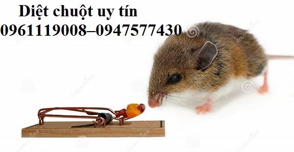 Công ty chúng tôi là một trong những đơn vị tiên phong trong việc xử lý chuột.