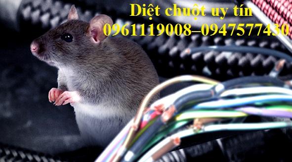 Tác hại của chuột vô cùng nguy hiểm nên khi thấy chuột xuất hiện chúng ta cần tiêu diệt chúng tận gốc