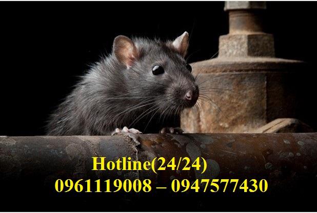Dịch vụ diệt chuột uy tín tận gốc tại Quận Gò Vấp