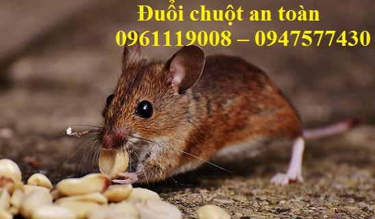 Dịch vụ diệt chuột tại Tân Bình là dịch vụ xử lý chất lượng, an toàn, hiệu quả nhất