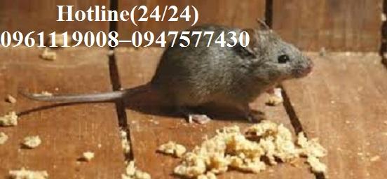 Công ty Quang Hải chuyên nhận các dịch vụ xử lý chuột, đuổi chuột uy tín, chất lượng tại Cần Giờ