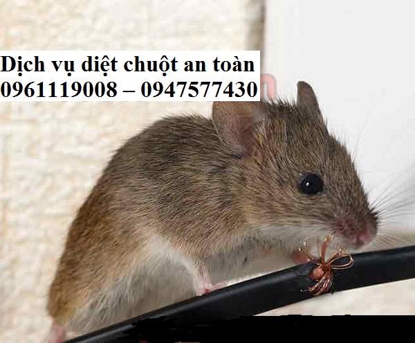 Chuột là loại động vật gặm nhấm có sức công phá vô cùng lớn nên khi vừa thấy chúng xuất hiện bạn cần tiêu diệt chúng tận gốc và triệt để ngay