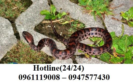 Bạn cần diệt rắn, phun ngừa rắn cho nhà, khu dân cư, công ty,..... hay bất kì nơi nào. Hãy liên hệ ngay cho chúng tôi qua hotline