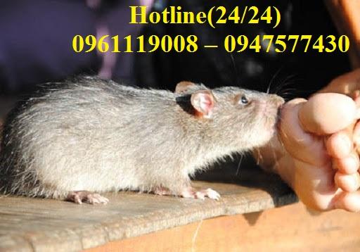 Chuột là mối nguy hại khiến con người luôn sẵn sàng tiêu diệt khi vừa thấy chúng xuất hiện