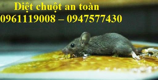 Dịch vụ diệt chuột chuyên nghiệp hàng đầu tại Hóc Môn